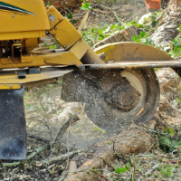 Stump Grinding East Finchley