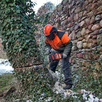 Tree Removal East Finchley